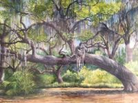 Florida Native Trees